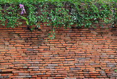 Tree with brick wall Royalty Free Stock Images
