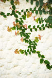 Tree with brick wall background Royalty Free Stock Images