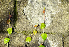 Tree with brick wall background Royalty Free Stock Image