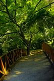 Tree and bridge. A wooded bridge and a big tree. the whole image is dominated by green and warm colors Stock Image