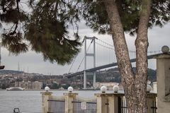The tree and the bridge on background in cloudy foggy afternoon and winter day royalty free stock image