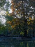 Tree and bridge in Chapultepec Park in Mexico City, Mexico. Tree and bridge in one of the smaller lakes of Chapultepec Park in Mexico City, Mexico Stock Images