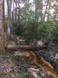 Tree Bridge royalty free stock photography