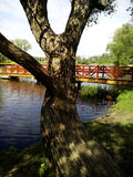 Tree and bridge on the lake. Park of polish Manor Pan.  tree and bridge on the lake Stock Photo