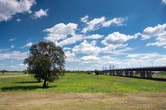 Tree and bridge over river Sava Royalty Free Stock Image