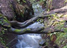 Tree bridge over stream Royalty Free Stock Photography