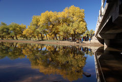 Tree bridge and river Royalty Free Stock Photos