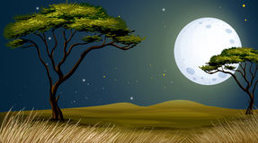 A tree and the bright fullmoon Stock Image