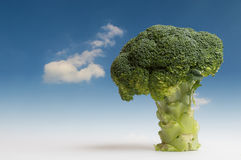 Tree of broccoli Stock Photo
