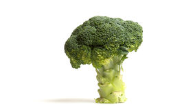 Tree of broccoli Stock Image