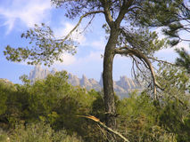 Tree with a broken branch, Montserrat, Catalonia, Spain. Stock Images