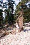 Tree broken Stock Photos