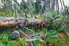Tree broken by a strong wind. Detail of a tree broken by a strong wind, storm damage royalty free stock photography