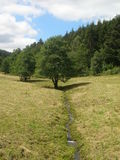 Tree and brook. In Sauerland, Germany Royalty Free Stock Photography