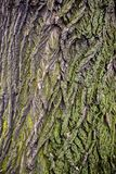 Tree brown bark texture with green moss royalty free stock photos