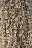 Tree brown bark texture. In nature Stock Photo