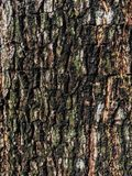Tree brown , green and black background. Tree brown , green and black texture background Royalty Free Stock Photography
