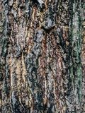 Tree brown , green and black texture. Background Stock Image