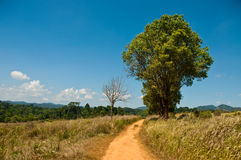 Tree, brown way and blue sky in national park Royalty Free Stock Photos