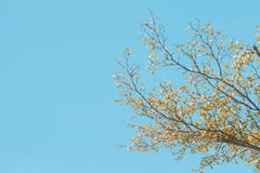 Tree brunch on blue sky Stock Photography