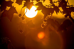 Tree brunch on sun background. Tree brunch on beautiful sun set background Stock Photography