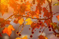 Tree brunch on sun background Royalty Free Stock Photo