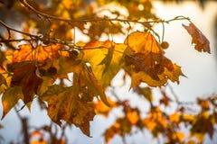 Tree brunch on sun background Stock Image