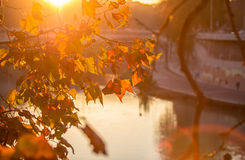 Tree brunch on sun background Stock Photos