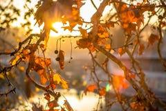 Tree brunch on sun background. Tree brunch on beautiful sun set background Royalty Free Stock Image
