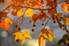 Tree brunch on sun background. Tree brunch on beautiful sun set background Royalty Free Stock Photography