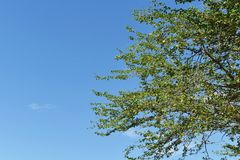 Tree brunch under blue sky Royalty Free Stock Images