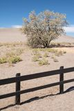 Tree at the Bruneau Dunes Stock Photography