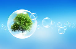 Tree in a bubble. Green tree in a bubble Stock Image