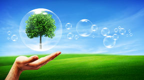 Tree in a bubble Royalty Free Stock Photos