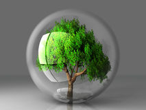 Tree in a bubble. A green tree in a transparent bubble Stock Image