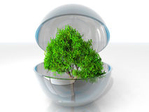 Tree in a bubble Stock Photo