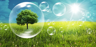 Tree in a bubble. Ecology, clean energy concept Royalty Free Stock Photo