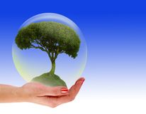Tree in a bubble on hand Royalty Free Stock Photo