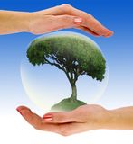 Tree in a bubble on hand Royalty Free Stock Photos
