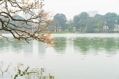 Tree in bud at Hoan Kiem lake in Hanoi capital with Turtle Tower - the symbol of Vietnam. Focus on the Turtle Tower.  Royalty Free Stock Photos