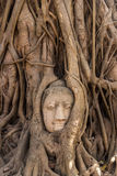 Tree Buddha in Ayutthaya Royalty Free Stock Photos