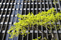 Tree and building Royalty Free Stock Photo