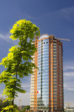 Tree and building. Green tree and growing building Stock Photo