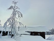Tree and building covered by thick snow cover stock image