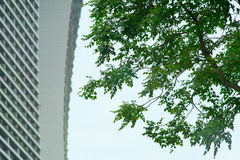 Tree and Building Stock Image