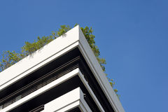 Tree on building Stock Photography