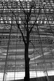 Tree and building illumination. Image scanned from b&w film, single tree in  night city under the modern building illumination Stock Photos