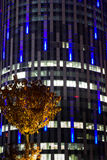 Tree and building. Office tower building and yellow iluminated tree by night Royalty Free Stock Photo