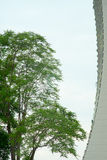 Tree and Building Stock Photography