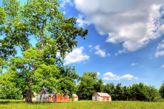 Tree and Buildings in the Coun. A tall tree and several buildings in a field are seen in this image of a rural field and countryside in warm weather Stock Image